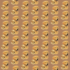 Golden retriever dogs on brown background