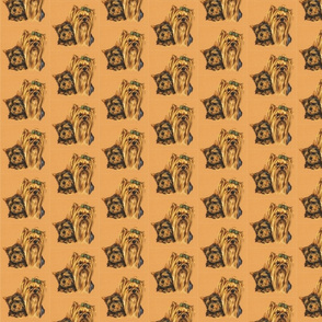 Yorkshire terrier dogs in portait on sand background
