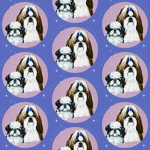 shih-tzu dogs with stars on blue .