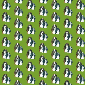 springer spaniel dogss on green background