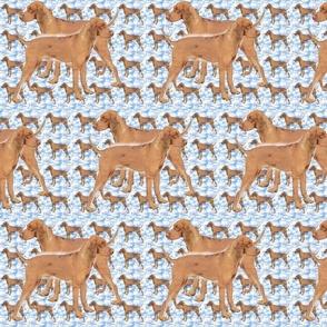 ridgeback_blue_pattern