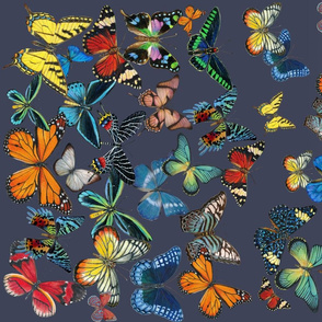 Butterfly Ombre Border Fabric