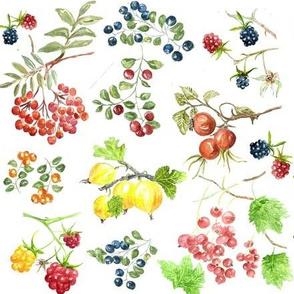 Wild summer berries