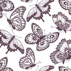 Butterflying-Around