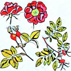 tea rose samples