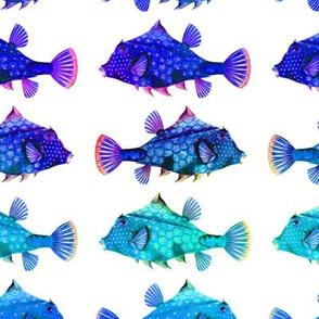 RAINBOW FUNNY LITTLE FISH PURPLE BLUE AQUA ON WHITE