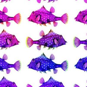 RAINBOW FUNNY LITTLE FISH PURPLE BLUE FUCHSIA ON WHITE