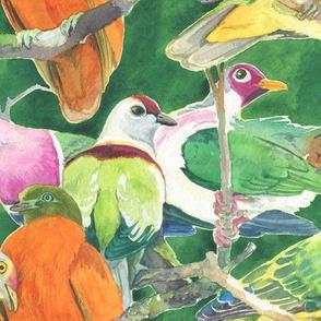 Fruit Doves in Green