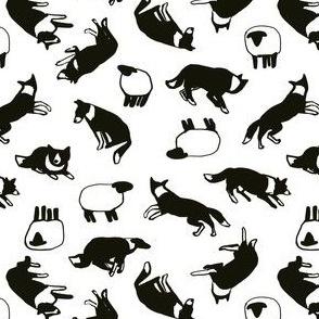 Border collies + sheep