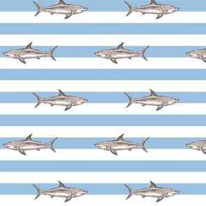 Fresh summer sharks