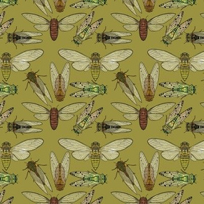 Small Scale Cicadas on Olive