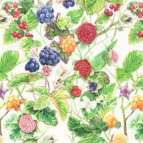 Rubus!