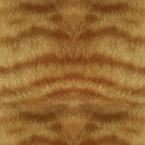 Natural Ginger Tabby Fur