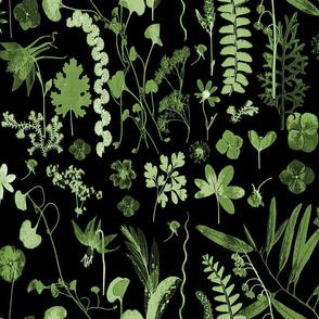 collectors garden green on black