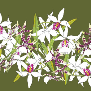 White Orchids on Olive Green 150