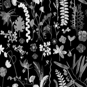 Collectors Garden Black and White