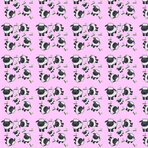 Black_sheep_pink