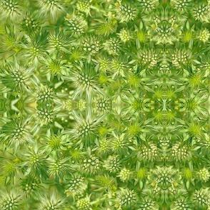 Prickly Seamoss7 mirrored