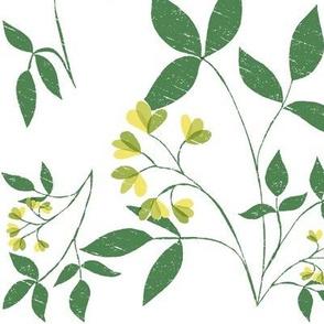 Botanical woodcut Mimosa A