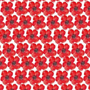 Poppies, field of poppies, remembrance
