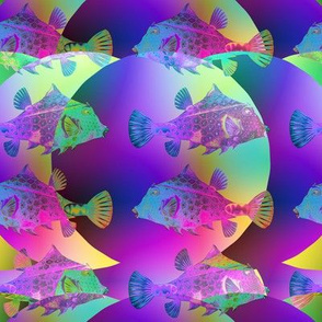 imaginary planet funny fishes multicolor rainbow