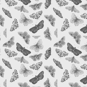 Butterflies in Silver