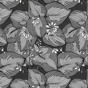 Hosta Garden | grays on black