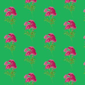 tea rose green
