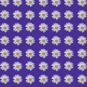 9 Daisies purple