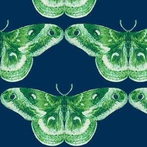 Kelly Green & Navy Blue Mystic Moth