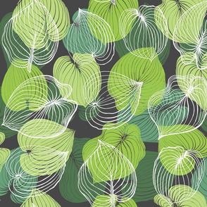 Hosta Leaves | Greens on dark gray