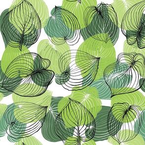 Hosta Leaves | Greens on white