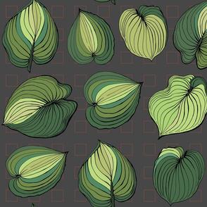 Hosta Leaves | Greens varigated on dark gray