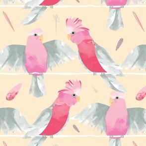 Pink Galahs CREAM BACKGROUND // Australian birds pink grey parrot cockatoo feathers