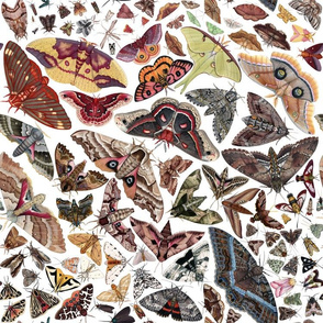 Moths of North America