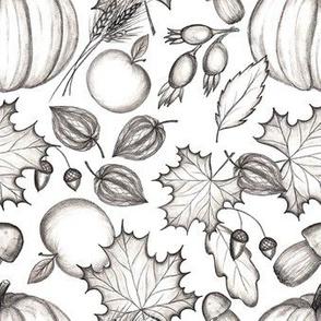 Fall Harvest. Pencil drawing