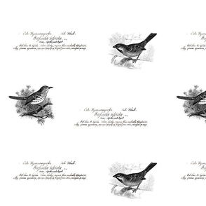 large vintage birds and script dark grey