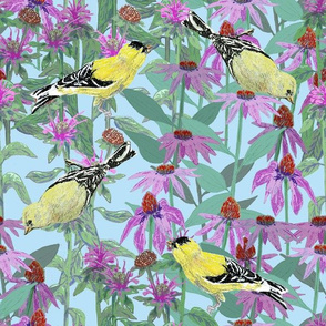 bee_balm_and_cone_flowers_and_gold_finches_off_set_C