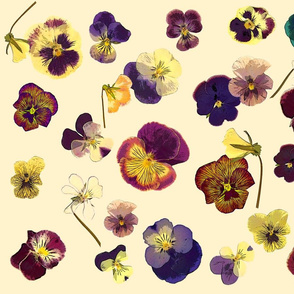 pansies on cream