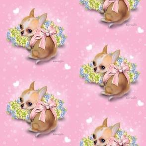 Chihuahua Baby pink M