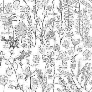 Collectors Colorbook Botanicals