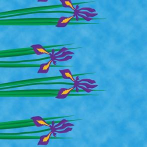 Iris Hanging