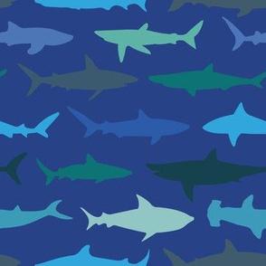 Sharks on Navy
