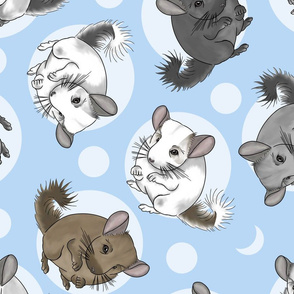 Chinchillas and moon dots - large blue