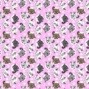 Chinchillas and moon dots - small pink