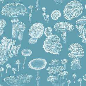 Mushrooms Blue White Fungi
