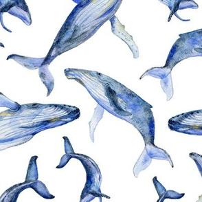 humpback whale dance (white)