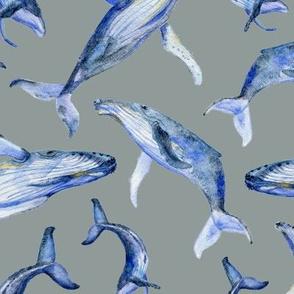 humpback whale dance (gray)