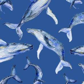 humpback whale dance (blue)