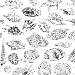 Unique collection of sea shells